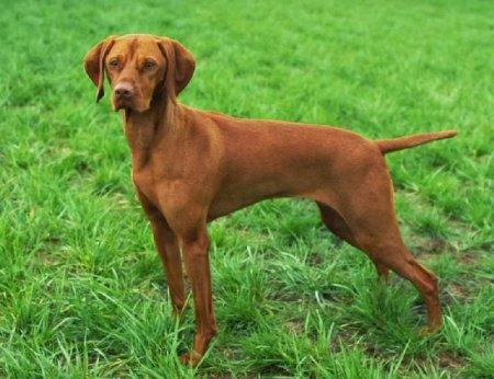 Разнообразные породы собак