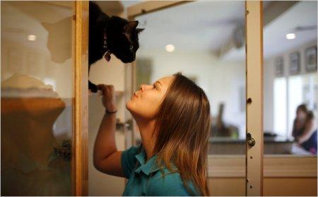 Райская жизнь для домашних животных