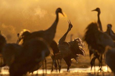 Животные от Стефано Унтертинера