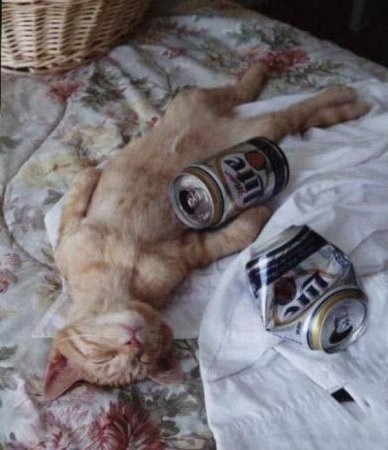 Подборка пьяных животных
