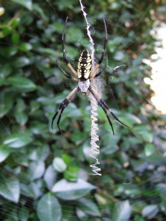 Пауки и паутины