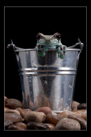 Красочные древесные лягушки от Angi Nelson