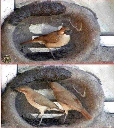 Как птица въет гнездо