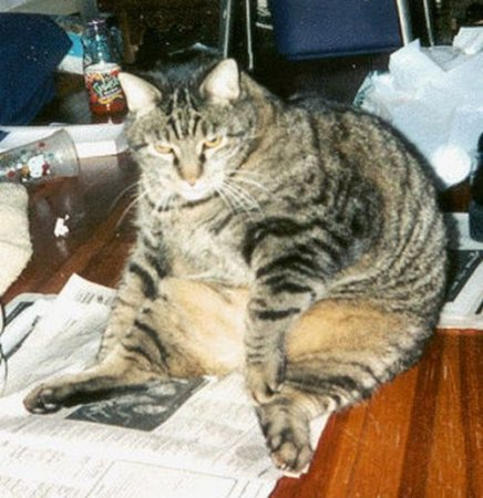 Коты-толстяки