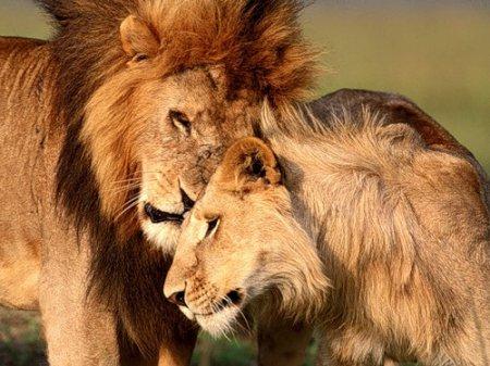Самые любвеобильные животные