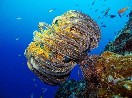 Кораллы – древнейшие существа на Земле
