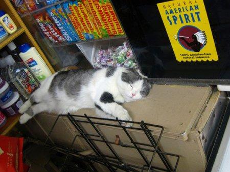 Коты в магазинах