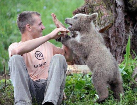 Заблудившийся медвежонок