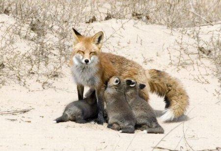 Прикольная подборка фото животных
