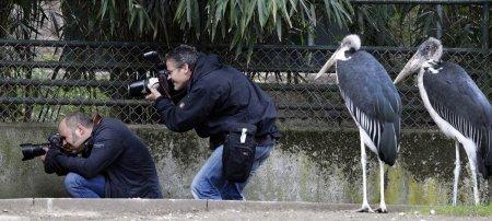 Яркие фотографии животных