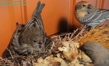 Птичья жизнь