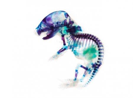 Прозрачные животные от Йори Томита
