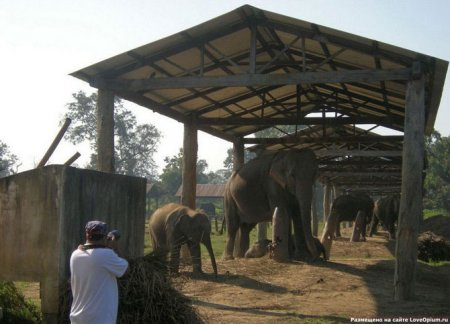 Слоны из Национального парка Читван