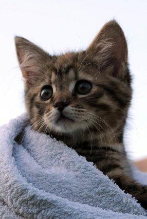 Котенок в стиральной машинке