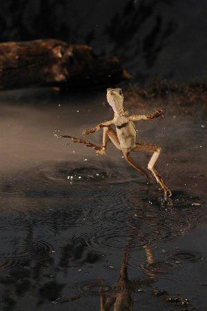 Фотографии животных от Скотта Линстед