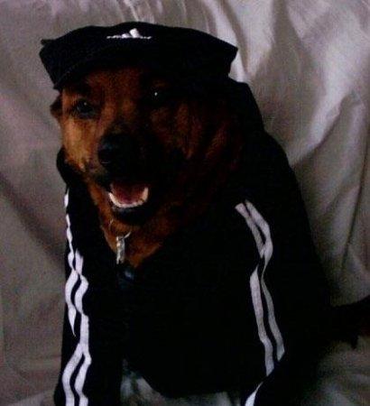 Собаки-гангстабаки