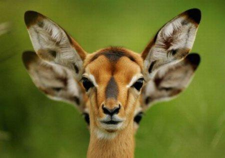 Животные в фотографиях