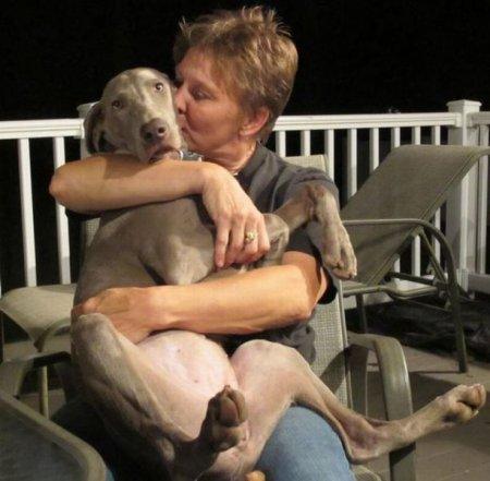 Собака - друг человека