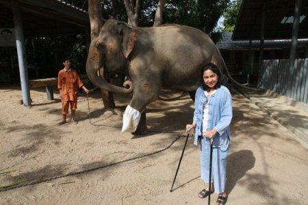 Первая в мире больница для слонов