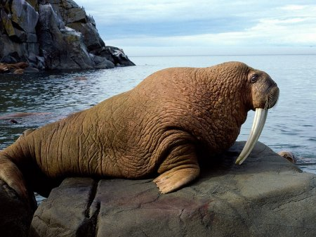 Топ самых больших сухопутных животных