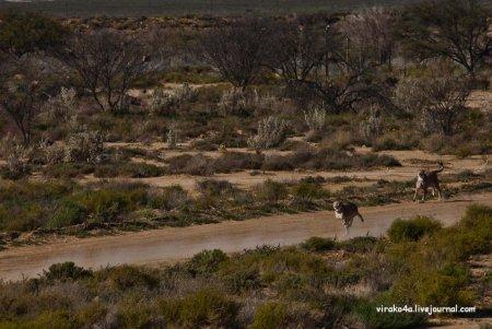 Прогулка сафари