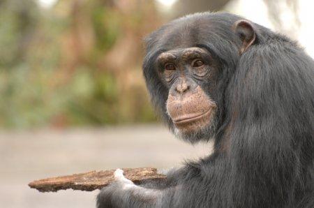 Десять самых умных животных