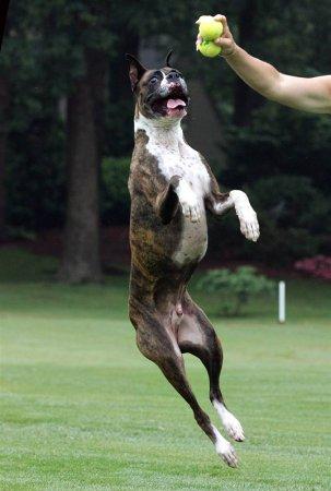 Топ самых популярных пород собак