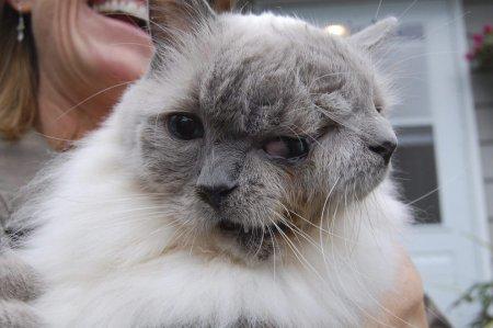 Кот с двумя мордочками