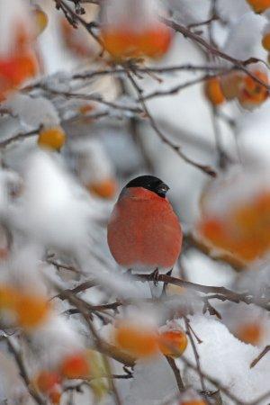 Лучшие фотографии дикой природы 2011