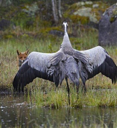 Фотографии птиц Маркуса Варесвуо