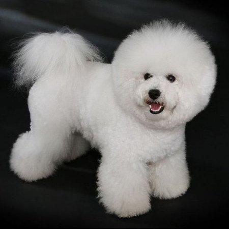 Самые известные породы собак