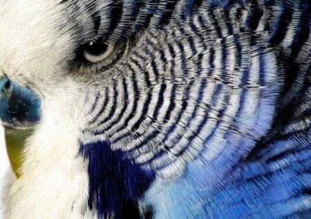 Взгляд в глаза животных