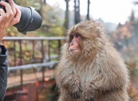 Прикольные фотографии животных