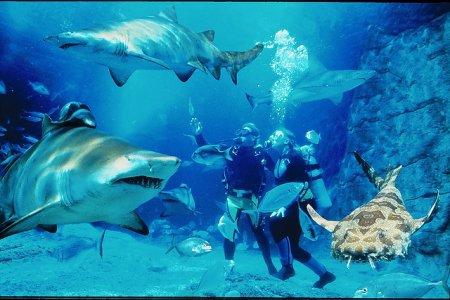 Путешествие в водных глубинах Австралии