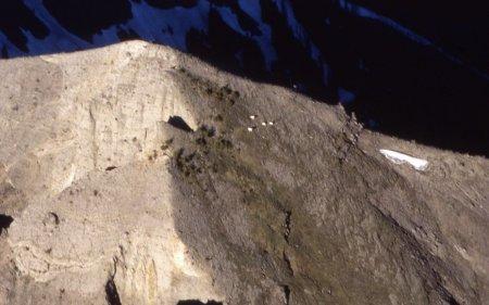 Козлы-скалолазы