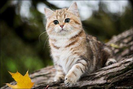Милая кошечка и осень