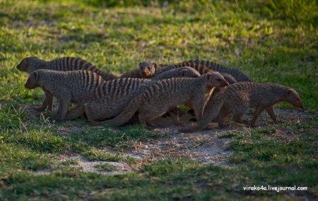 Национальный парк Намибии - Этоша