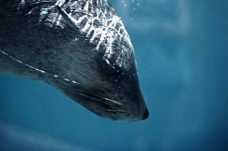 Фотографии конкурса от National Geographic
