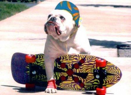 Тайсон и скейтборд