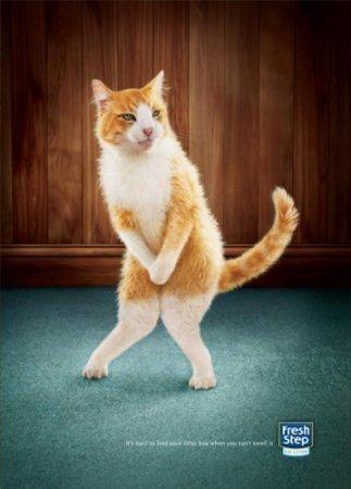 Прикольная реклама наполнителя туалета для кошек