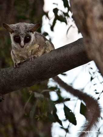Национальный парк Чобэ в Ботсване