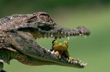 """Обои для рабочего стола на тему """"Крокодилы"""""""
