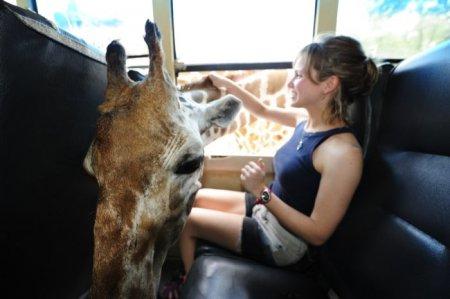 Ласковый жираф