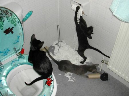 Кошачьи шалости
