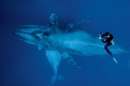 Обитание горбатых китов на Гаваях