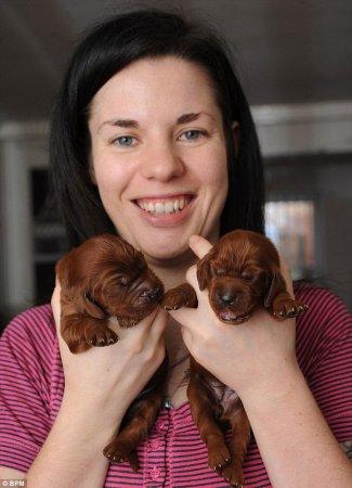 15 щенков от одной мамы
