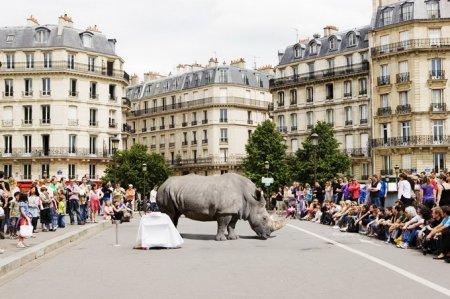 Фото диких животных от Renaud Marion