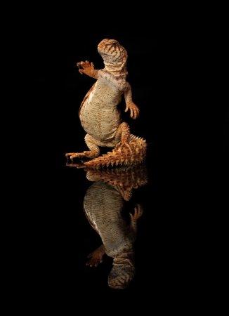 Фотосессия геккона