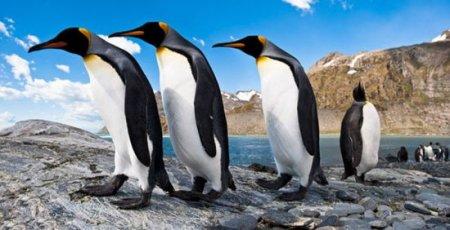 Фотографии пингвинов от фотографа Ника Гарбутта