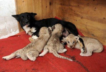 Кормящие собаки в китайских зоопарках